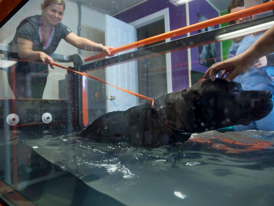 Ruger is put through his water therapy workout by Dr.