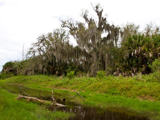 One of the canals used by the Calusa Indians. The canal is in the area which now houses part of the Randall Research Center in Pine Island.