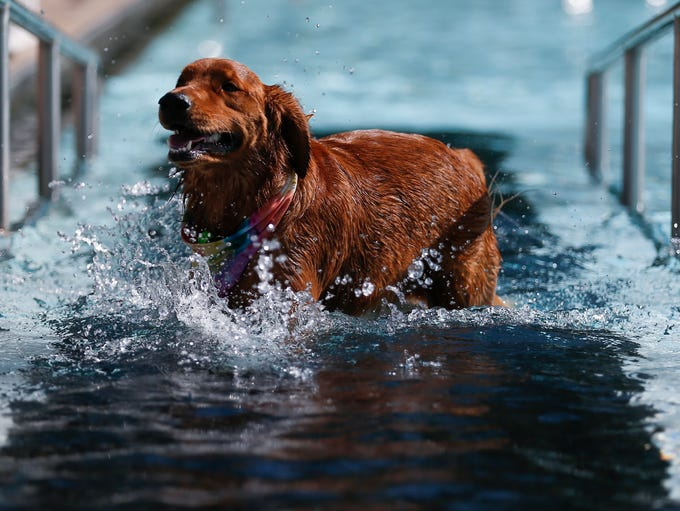 Dogs took to the Fassnight Park Pool during the annual