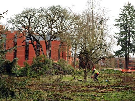 Hospital Tree Removal