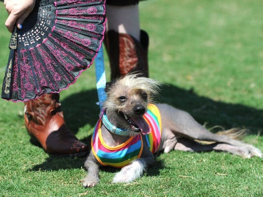 Jello, a Chinese crested dog, stays cool in a breeze provided by owner Keri King during a previous Bark in the Park.