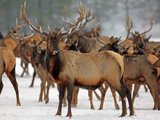 Beastly-Winter-1-.jpg