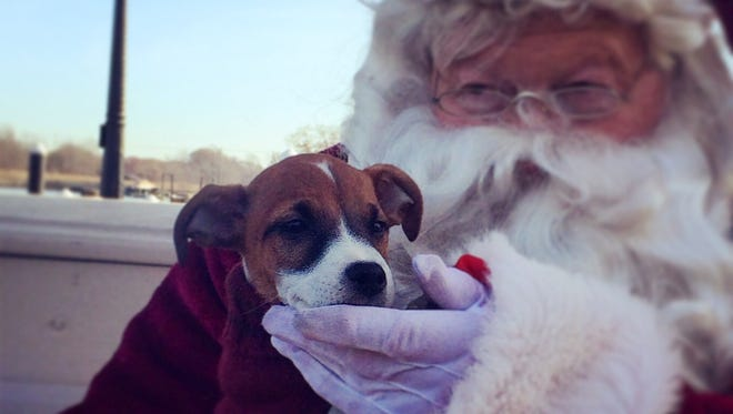 Colby the Jack Russell looking innocent with Santa after the pet parade in Chesapeake City, Md.