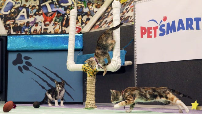 Kittens put their best paws forward on the set of Kitten Bowl III in New York.