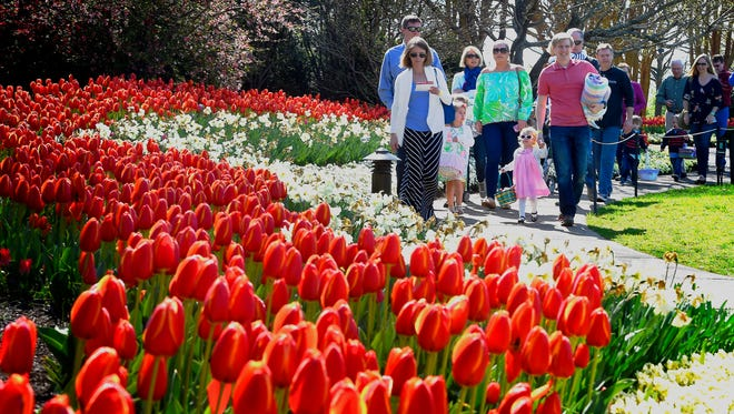 Flowers and trees are blooming and the tulips have come along early because of the warm spring we have had according to Patrick Larkin, Senior VP of Gardens at Cheekwood on Saturday March 26, 2016.