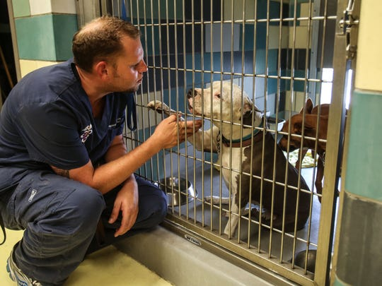 Ryan Long, the interim shelter manager at the San Jacinto Valley Animal Campus plays, with a evacuated dog from the Cranston Fire on Thursday, July 26, 2018 in San Jacinto. The shelter has received 163 pets of all kinds from the fire. Some were brought in by their owners and some by emergency responders.