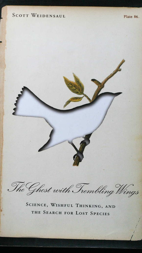 ghost-trembling-wings-weidensaul