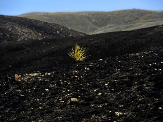 A prescribed fire was used for the first time to expose a cultural site on BLM land near Malta.