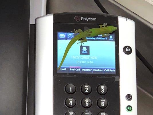 Gecko Calling