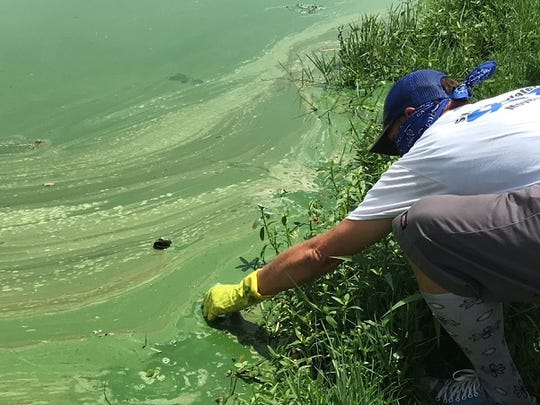 John G. Heim of the South Florida Clean Water  Movement collects a bottle of Caloosahatchee River water at the Franklin lock and dam, where a mat of blue-green algae has formed.