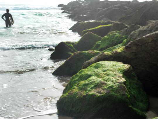 Ventura Beach Walk offers a 2.5-mile walk along the