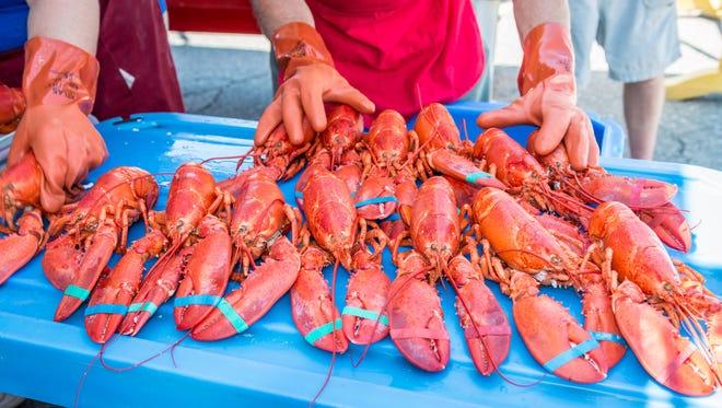 Rockland, Maine reclama el título de Capital mundial de la langosta.  Pruebe los famosos mariscos en el Festival de la langosta de Maine, que tiene lugar aquí en agosto.