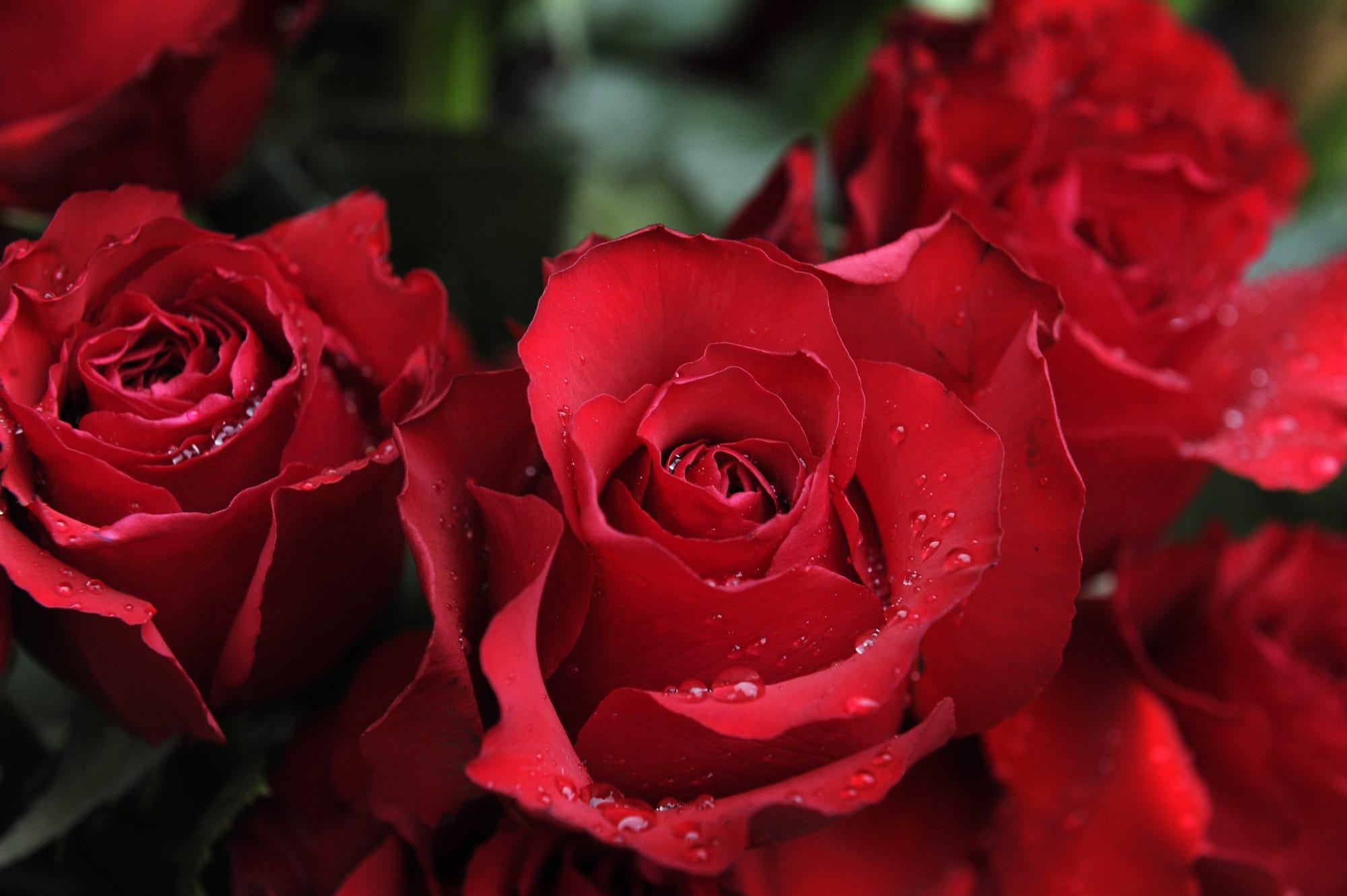 Kitty lov rose red tylerr | Porn images)
