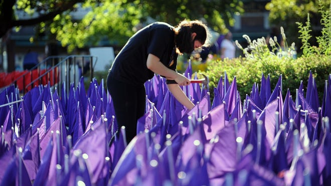 Alexa Solomon, a senior at Natick High School, places purple flags on the lawn of the First Congregational Church Friday evening in advance of Opioid Awareness Day Aug. 31.