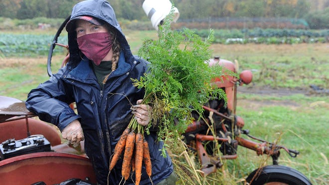 Stearns Farm manager Ember Fleming holds up some just-pulled carrots on Tuesday morning. MetroWest, which has been in drought conditions for most of the fall, received some welcome steady rain on Tuesday.