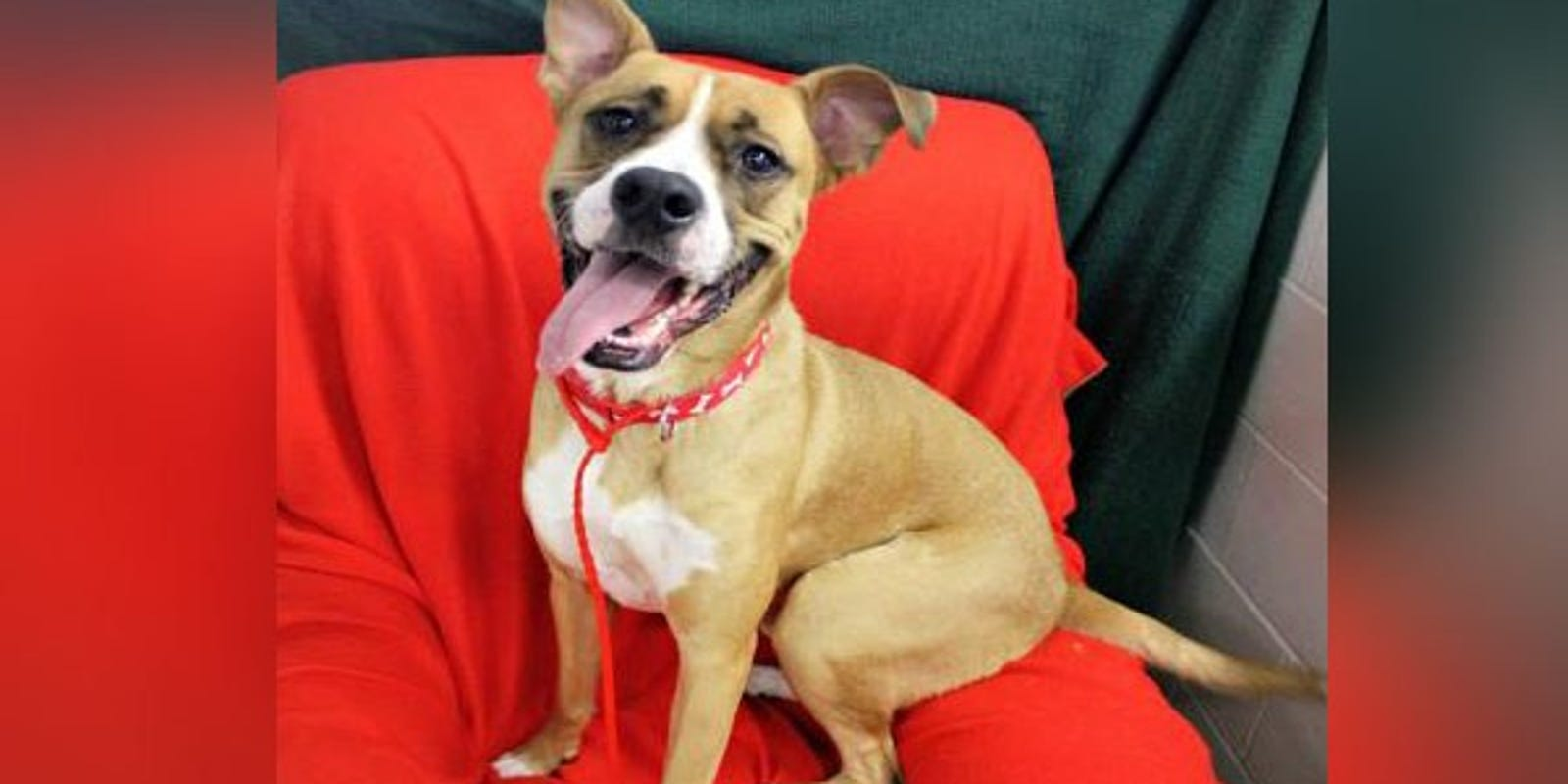 Nky Animal Shelter Sees Every Dog Adopted