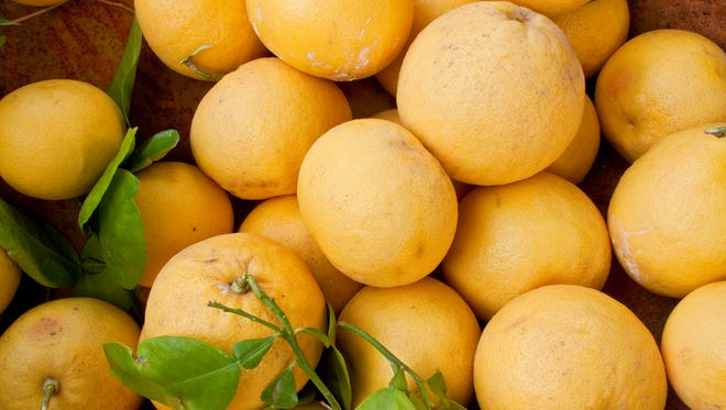 Avoid pruning your grapefruit or other citrus trees during the summer. It can cause the tree to fail.