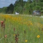 Wildflowers get some love in Santa Rosa County