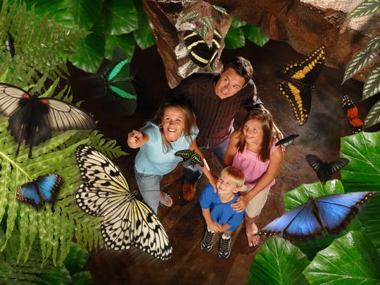The Butterfly Palace in Branson opened in 2006 and