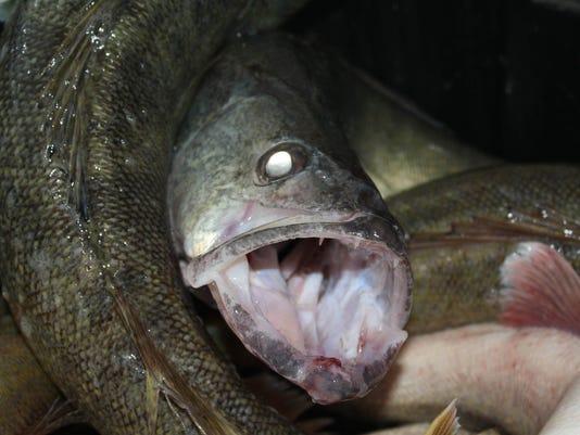 ptc 0813-fish