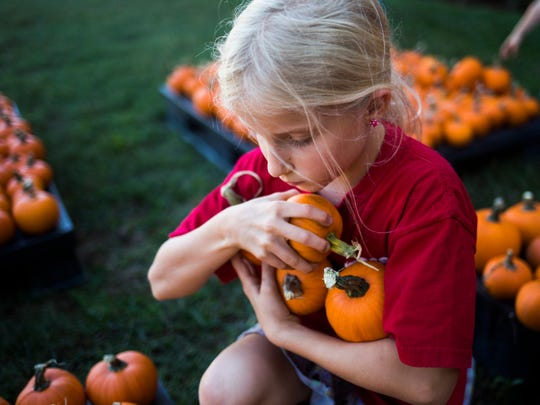 Ellie House, 9, helps unload baby pumpkins at Trinity United Methodist Church on Wednesday, October 12, 2016 in Anderson.