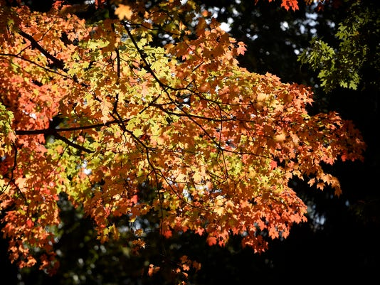 LDN-MKD-110817-fall color-