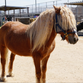 Neglected horse named Fabio rescued and ready for adoption