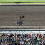 Triple Crown Champion American Pharoah gallops in front of a large crowd of enthusiastic fans at Monmouth Park in Oceanport, New Jersey on Saturday morning August 1, 2015. American Pharoah will compete in tomorrow's (8/2) $1,750,000 Haskell Invitational. Photo By Taylor Ejdys/EQUI-PHOTO