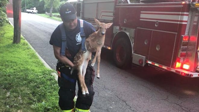 Englewood firefighter Rob Hallenbeck helps a deer out of a storm drain July 19, 2018.