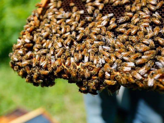 Despite facing myriad challenges, local beekeepers