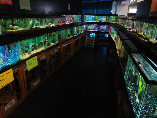 Bright fish tanks line up at Growing Point Pet Center and will be on sale because the store is closing its doors after 35 years of business.