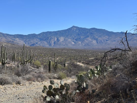 The view of the Rincon Mountains from the Hope Camp
