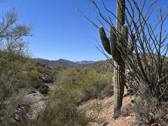 Gorgeous desert plants and mountain vistas define the