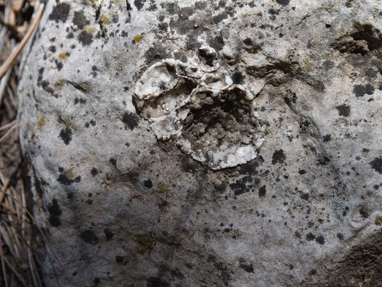 Look for tiny crystals in the limestone walls of Fay