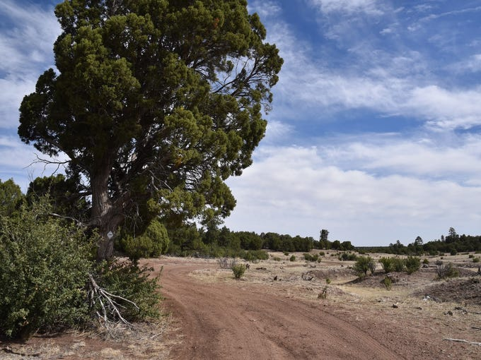 Much of the Ghost of the Coyote trail follows old roads