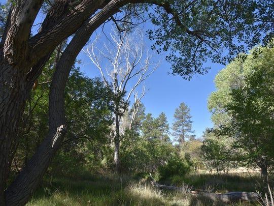 Greenery along Butte Creek Trail.