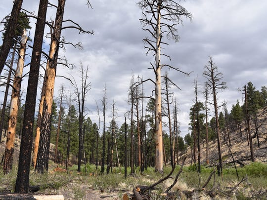 Scars of the 2011 Wallow Fire are plentiful along parts of the South Fork Trail.