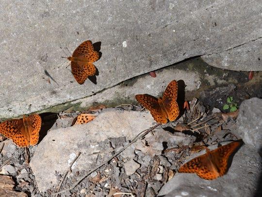 Keep an eye out for butterflies near Pivot Rock and Wildcat springs.