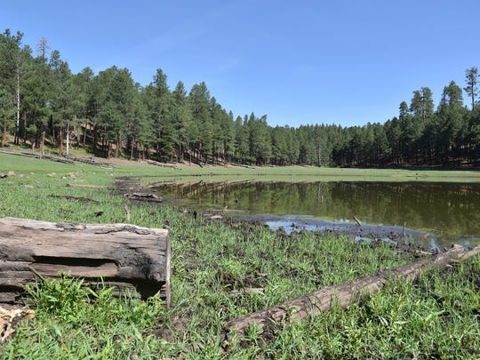 Potato Lake is surrounded by pine forest.
