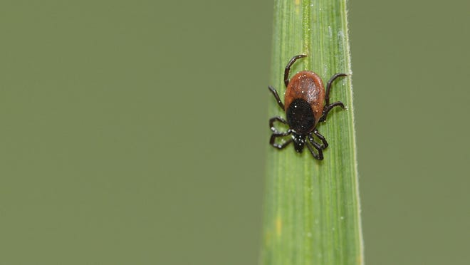 Blacklegged ticks, which spread the most disease in the U.S., are on a relentless northward march that is closely linked to mild winters and warming summers that gave ticks more opportunity to find hosts.