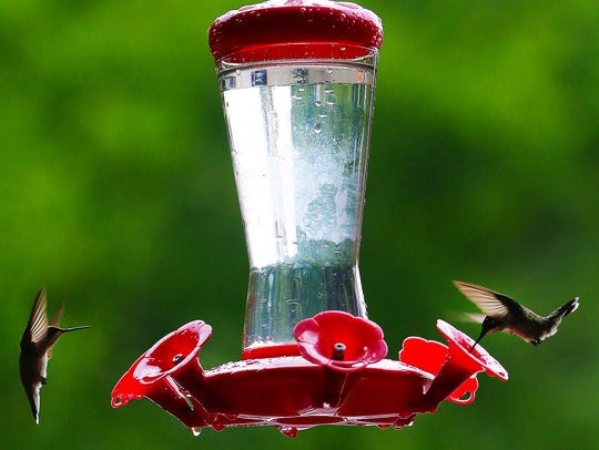 A Hummingbird feeds at the Wilderness Station at Barfield