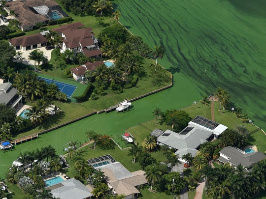 A blanket of algae covers a canal in the North River Shores neighborhood between Northwest River Trail and Northwest San Souci Street on June 24, 2016, along the St. Lucie River in Stuart.