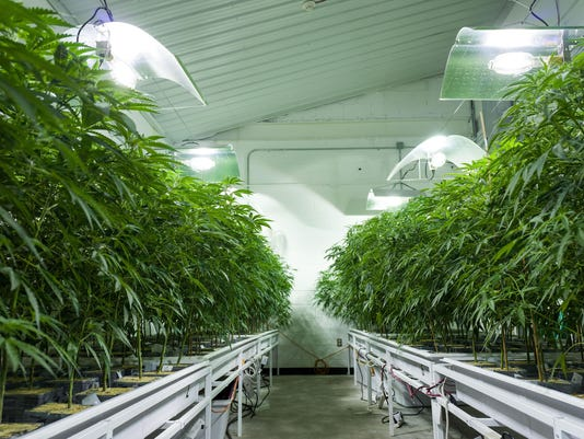 Marijuana Grow Near Albany For State's Legal Medical Marijuana Dispensaries