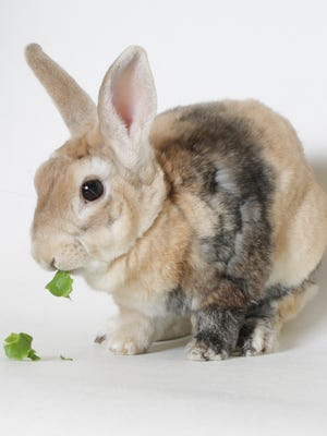 Now that i'm feeling better, I'm quite outgoing and quite active. Plus, I m the cutest bunny here! Come meet me!