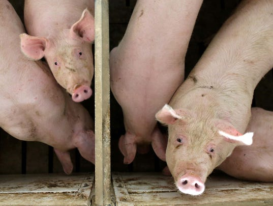 pork barell is it boon or But reviving earmarks is still so controversial that boehner and other leaders are unlikely to publicly discuss it in an election year in which pork barrel spending is still under attack the discussions so far appear to be among republicans.