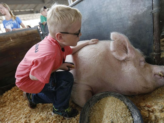 Wyatt Whitham, 11, checks in on the family pig, Gru, on Thursday, Aug. 13, 2015, before weighing in for the Big Boar contest at the Iowa State Fair in Des Moines.