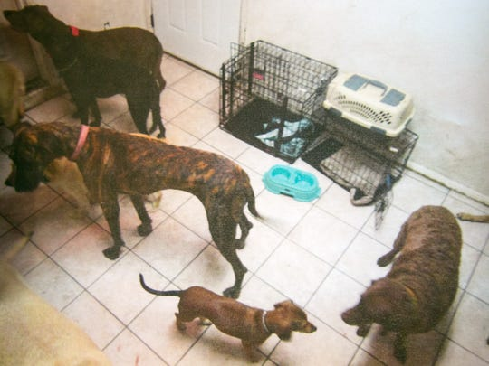 Photos of some of the dogs at the Gilbert boarding