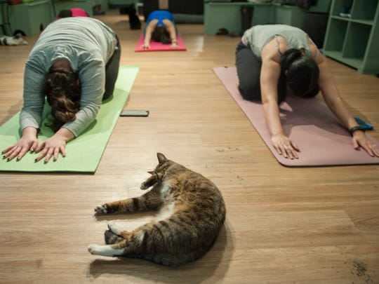 Participants take part in a yoga class as a cat adopt their own poses nearby at Le Cat Cafe in Philadelphia.