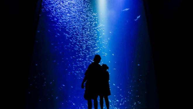 Robert and Tina Humphries, of West Plains, look up at the bait ball while walking through the Wonders of Wildlife National Museum and Aquarium on Friday, Sept. 22, 2017.
