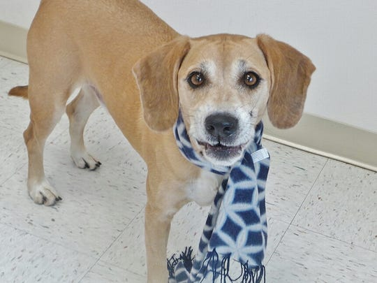Boomer is a 6-year-old hound mix who is just the sweetest dog. Look at that face! Boomer came into us with a mouth full of porcupine quills. We got him immediate vet help and he's healing nicely and is looking for his forever home. Can you help Boomer?